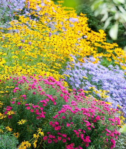 A Terrific Fall Border With Asters And Rudbeckia Fall Borders Urban Garden Design Flower Beds