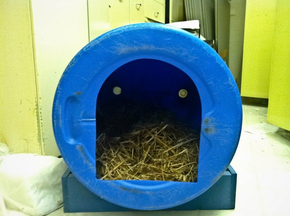 Greensboro S For The Dogs Barrel Dog House Goat House Plastic