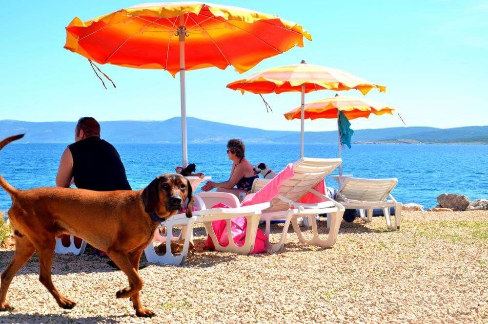 Baden Relaxen Mit Hund Am Luxus Hundestrand In Crikvenica In Der Kroatischen Kvarner Kvarner Bucht Kroatien Urlaub Mit Hund Hundestrand
