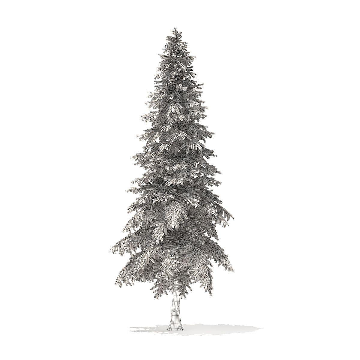 Spruce Tree 3d Model 6 4m Rasteniya Cvety