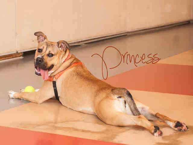 Princess Pittsburgh Pa Petharbor Com Animal Shelter Adopt A Pet Dogs Cats Puppies Kittens Humane Society Spca Lost Fou Pets Dog Adoption Animals