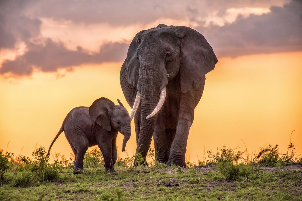 Daily Dozen Photos National Geographic Your Shot Elephant Photography Elephant World Elephant Day