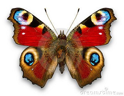 Pinned As Batterfly But Pretty Sure This Is A Moth Especies De Mariposas Imagenes De Mariposas Arte De Mariposa