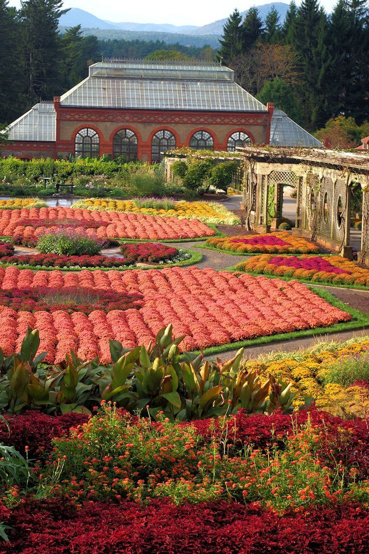 Fall mums and colors in the Walled Gardens at Biltmore Estate in Asheville NC