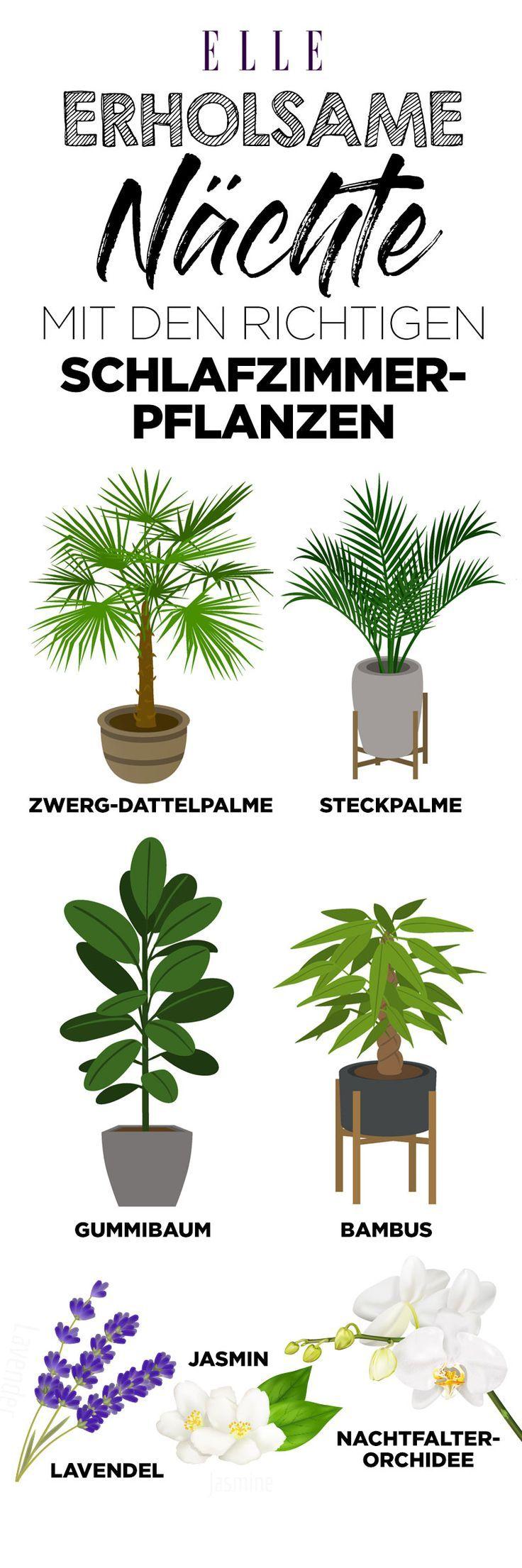 luftverbesserer diese pflanzen sind super f r die wohnung. Black Bedroom Furniture Sets. Home Design Ideas