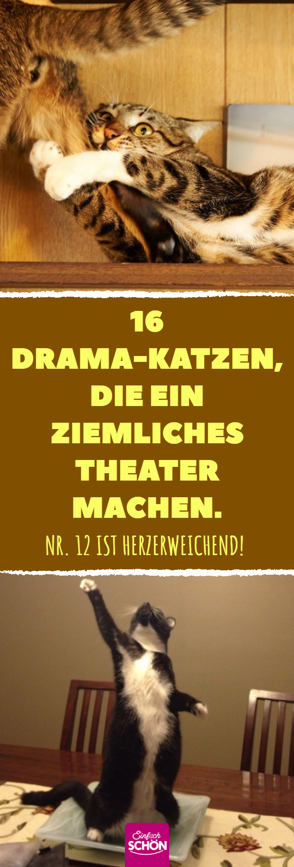 16 Drama-Katzen, die ein ziemliches Theater machen #scenesfrommovies