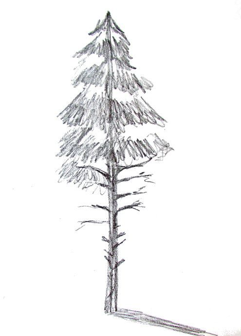How To Draw A Tree Happy Family Art Trees Drawing Tutorial Tree Drawing Flower Drawing