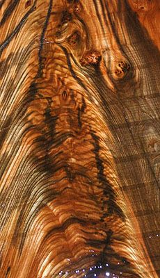 English Wych Elm With Crotch Figure Wood Wood
