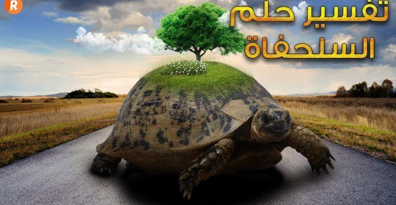 تفسير حلم السلحفاة في المنام Animals Turtle