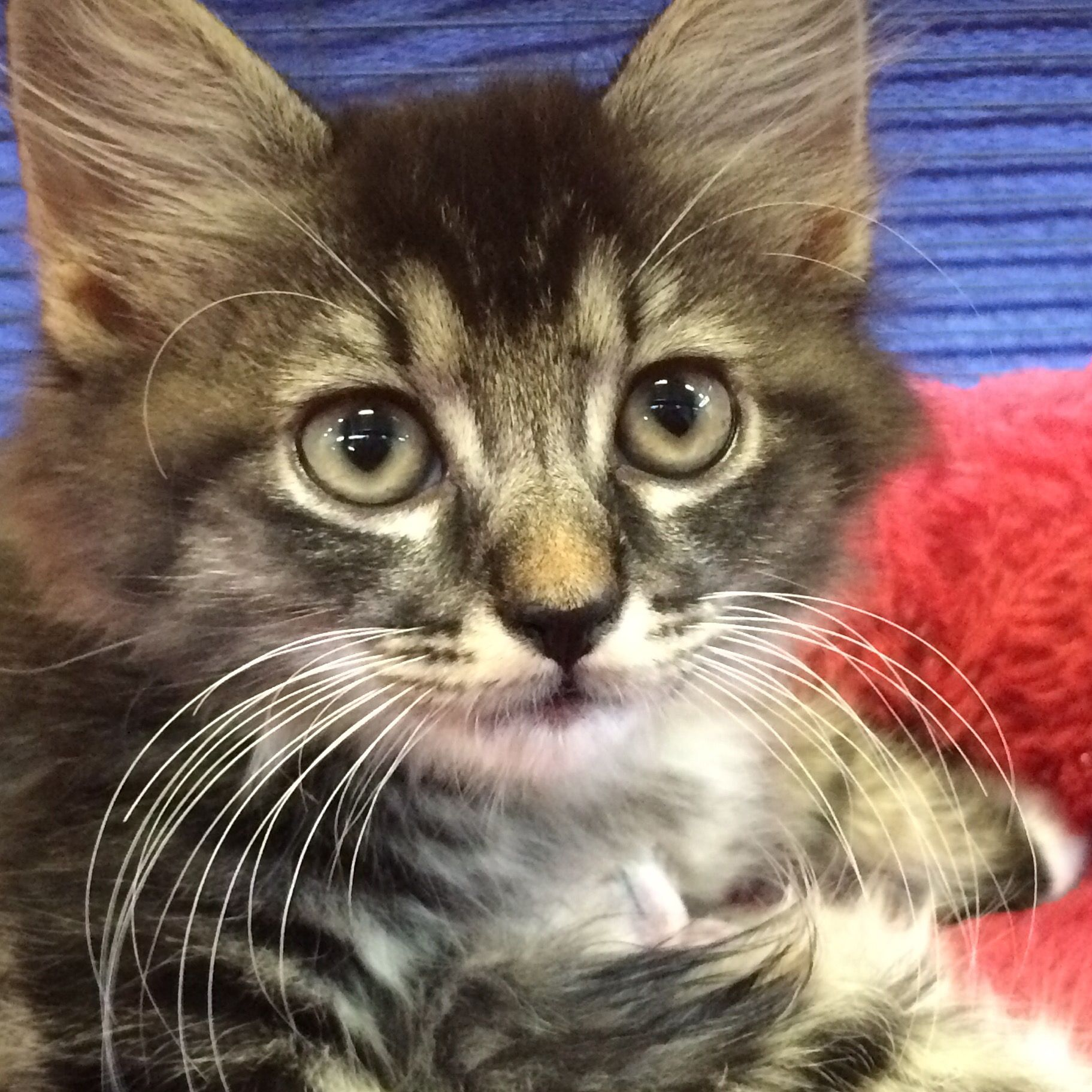 I'm cute. Pick me! Kittens cutest, Cats and kittens, Kittens