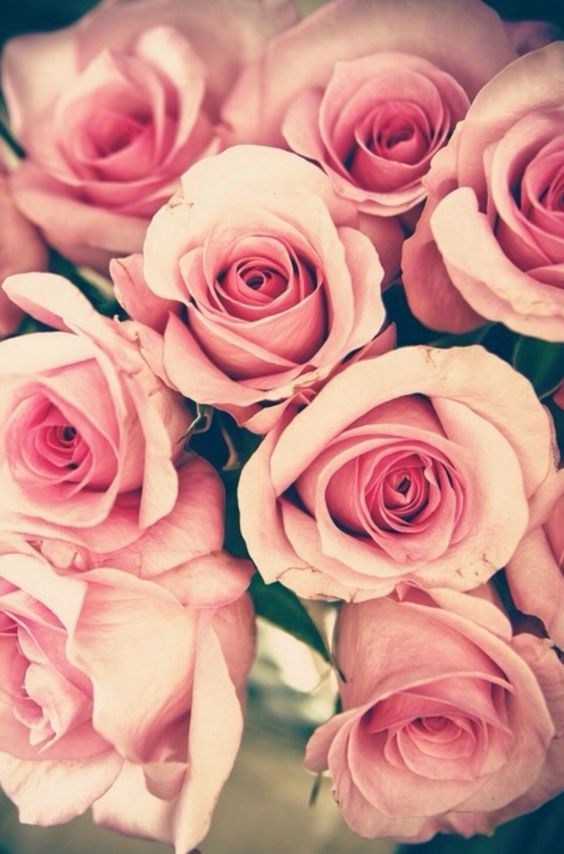 Why Being Single On Valentine S Day Is Okay Beautiful Roses Pretty Flowers Flowers