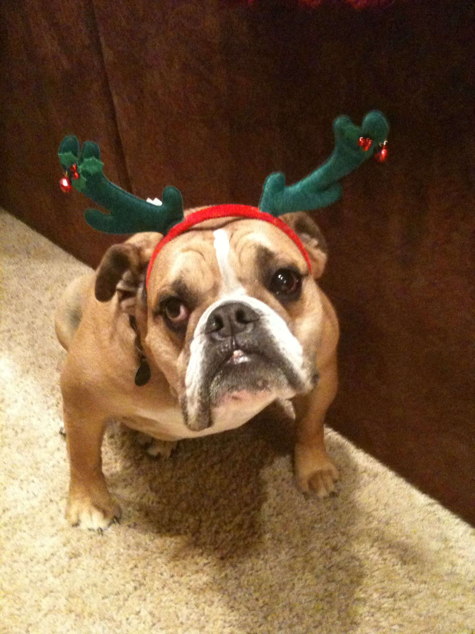 Why do I always have to be the reindeer?