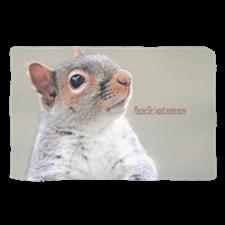 Oliver Twist Squirrel Sheer Scarf Squirrel, Oliver twist