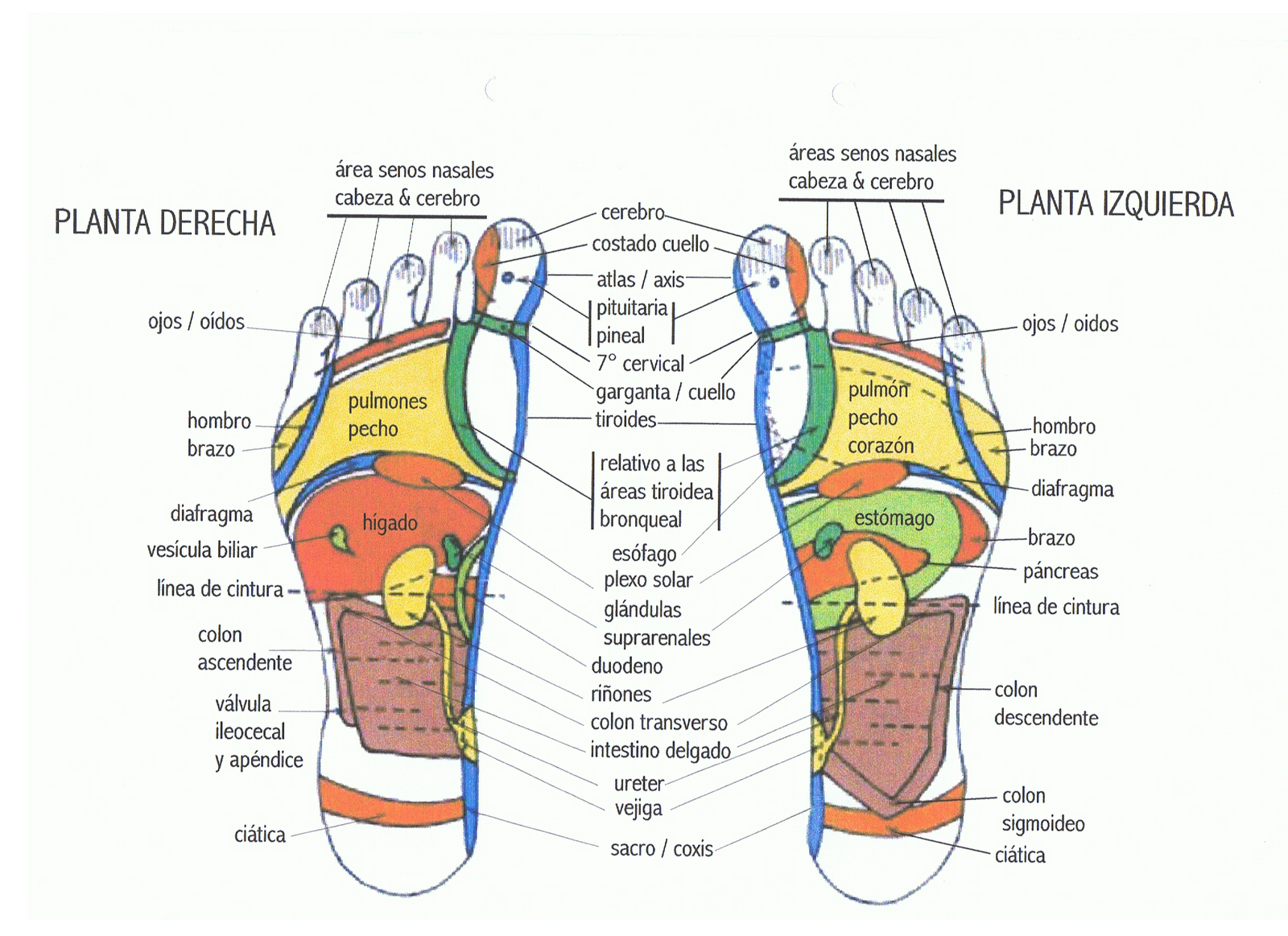 La operación del ajuste de las venas en los pies