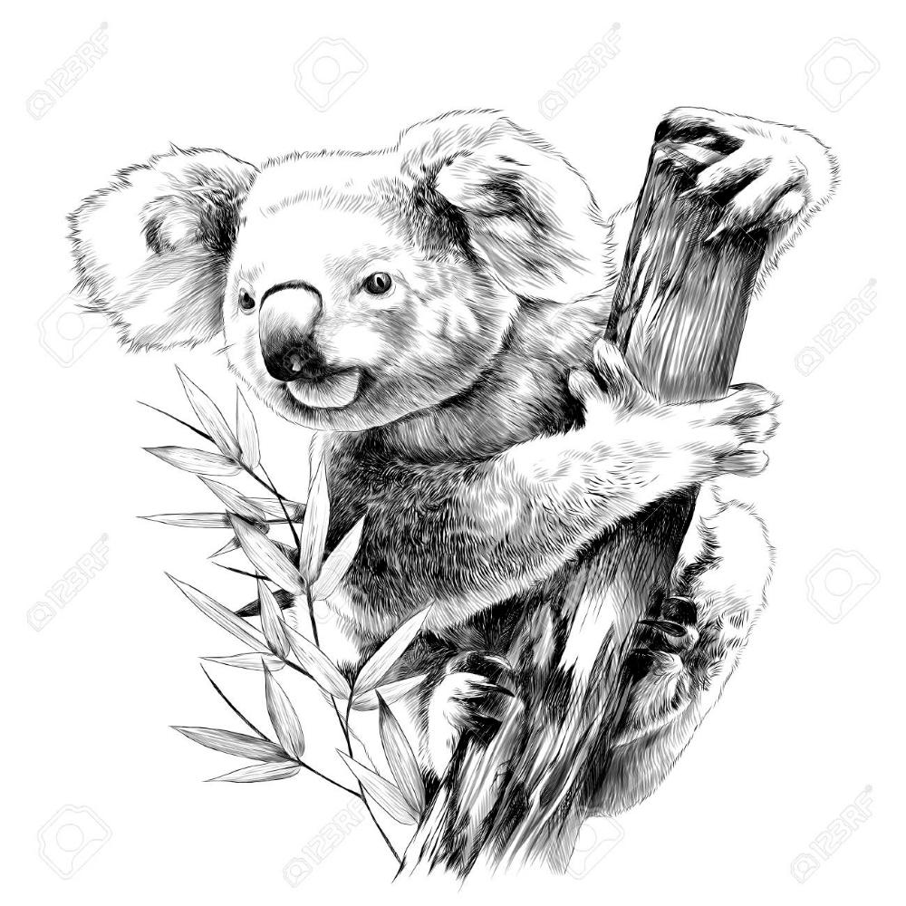 Koala Sentado En Un Enganche De Eucalipto Come Dibujo Monocromo De Graficos Vectoriales De Dibujo Bosquejos De Animales Koala Animales Australianos