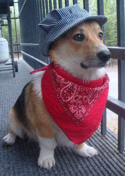 Train Conductor All Aboard Corgi Pet Costumes Corgi Dog