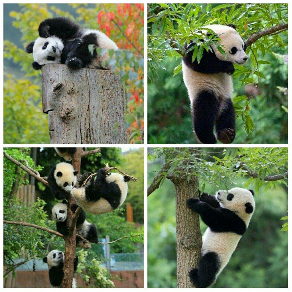 Pin Von Dragana Brenner Auf Panda