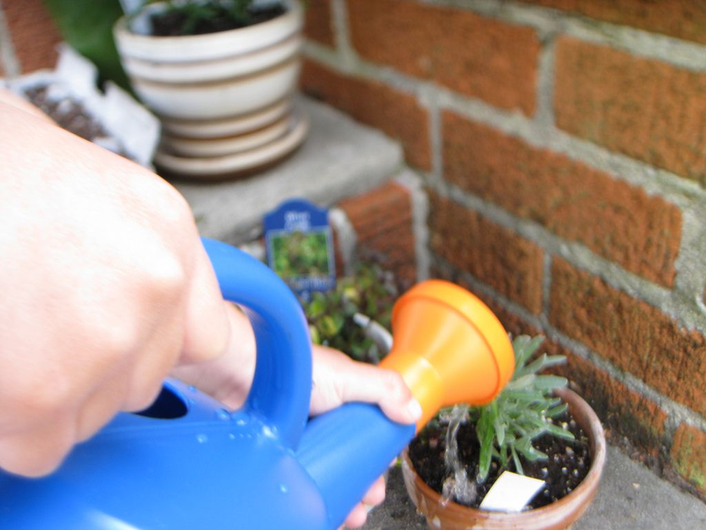 Container plant watering how much and how often to water - How often to water vegetable garden ...