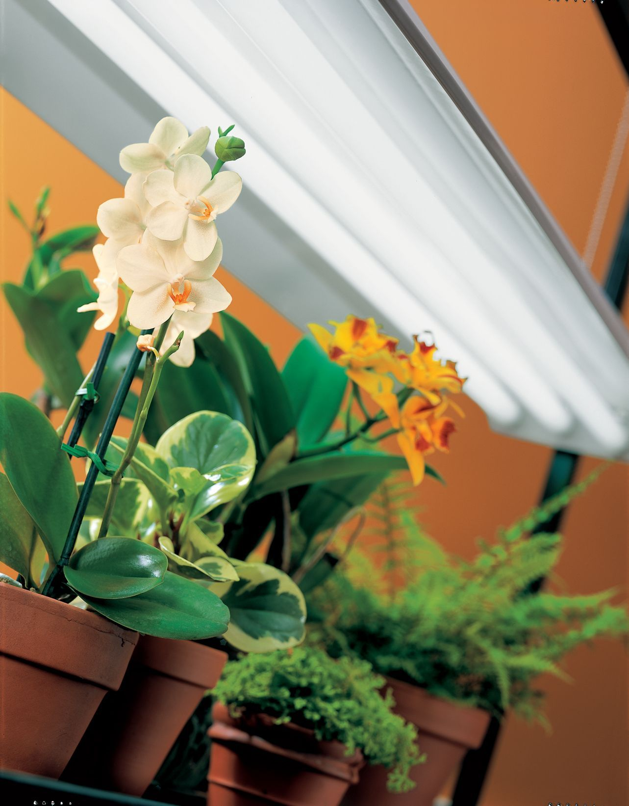 Black SunLite® Fixture with 3 Bulbs