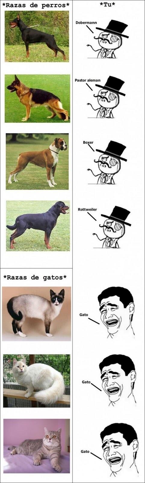 Roky146 Compartio Una Imagen New Memes Best Memes Funny Dog Memes