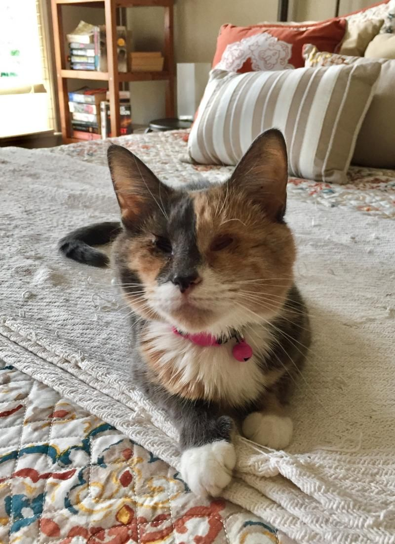 Adopt Patches the Blind Kitty on