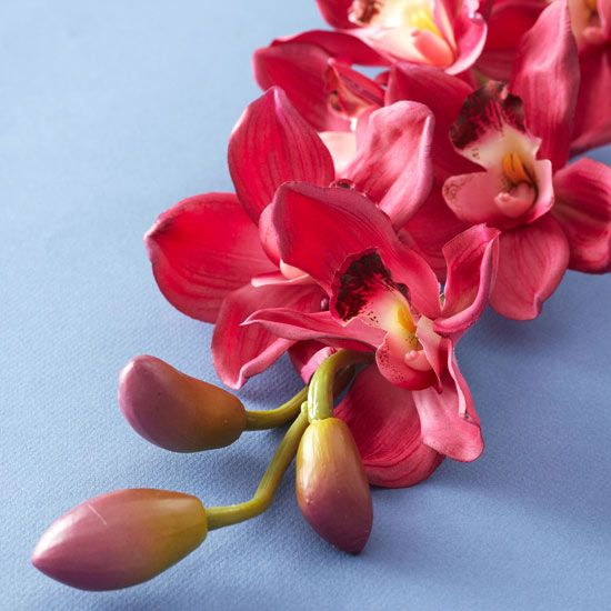 Romantic flower meanings pink orchids exotic flowers and orchid mightylinksfo