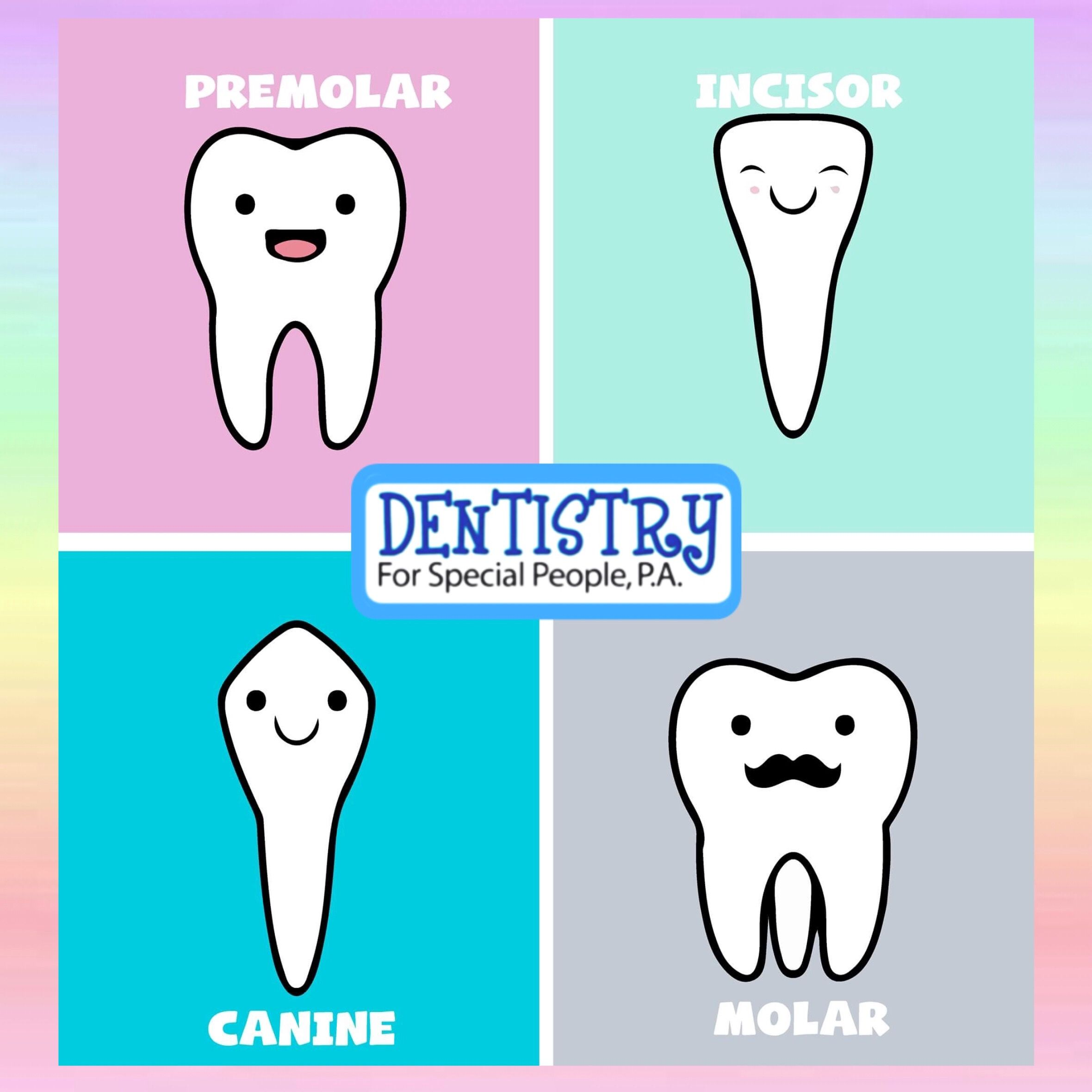 Did You Know Their Are 4 Types Of Teeth Incisors