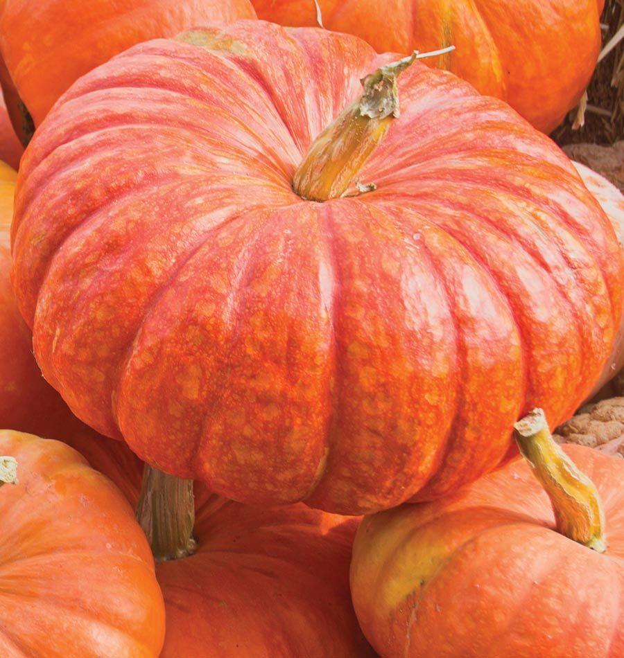 rouge vif d u0027etampes rouge meals and gardens