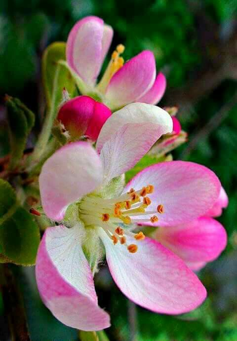 Pink and white blossoms of spring pink and green pink and green beautiful flowers mightylinksfo