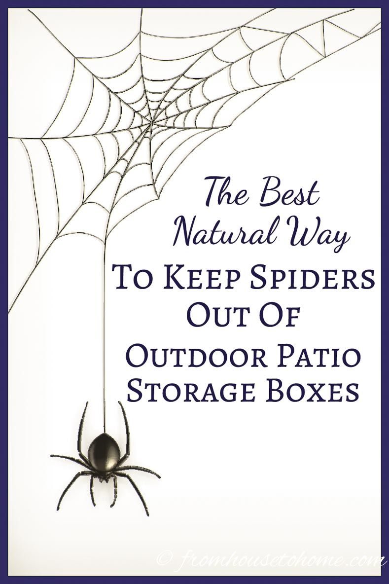This Natural Way To Keep Spiders Out Of Outdoor Patio Storage Bo Is The Best It Doesn T Use Pesticides Or Other Harmful Chemicals Plus S So Easy