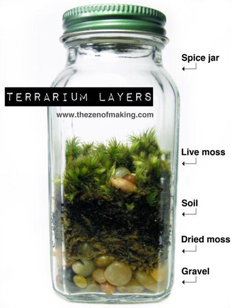 Spice Jar Terrarium Terrariums Pinterest Terrario Estufa De