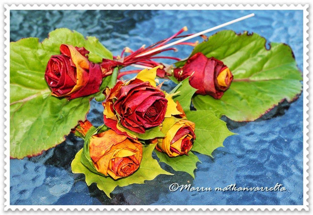 Matkanvarrelta: Vaahteranlehti ruusut