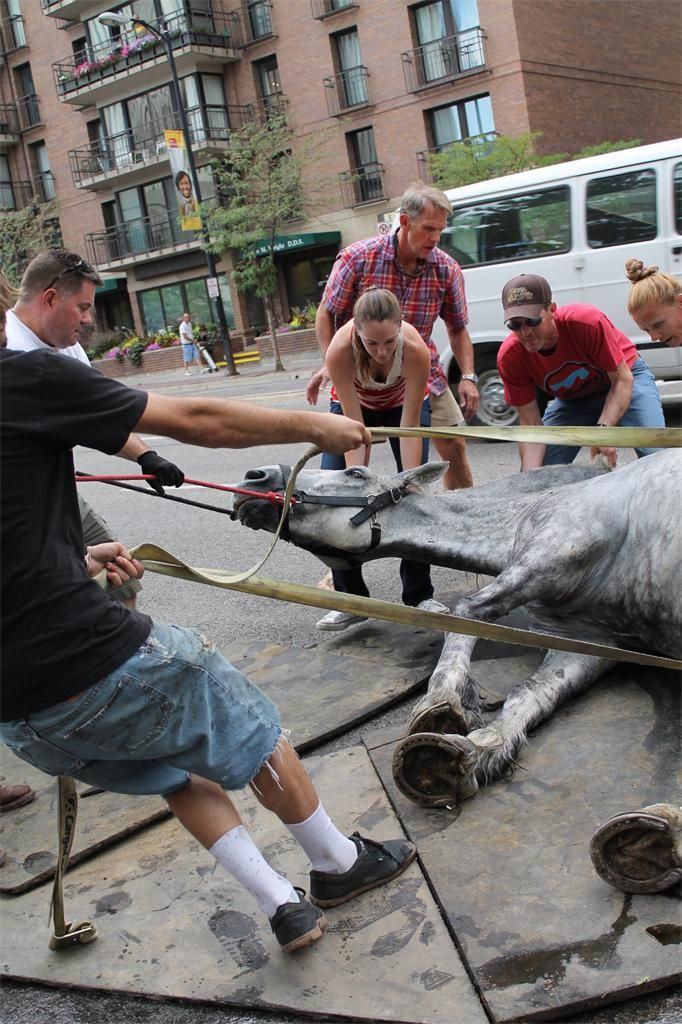 Horse pulling carriage collapses in Salt Lake City   Horses do not belong on busy streets.