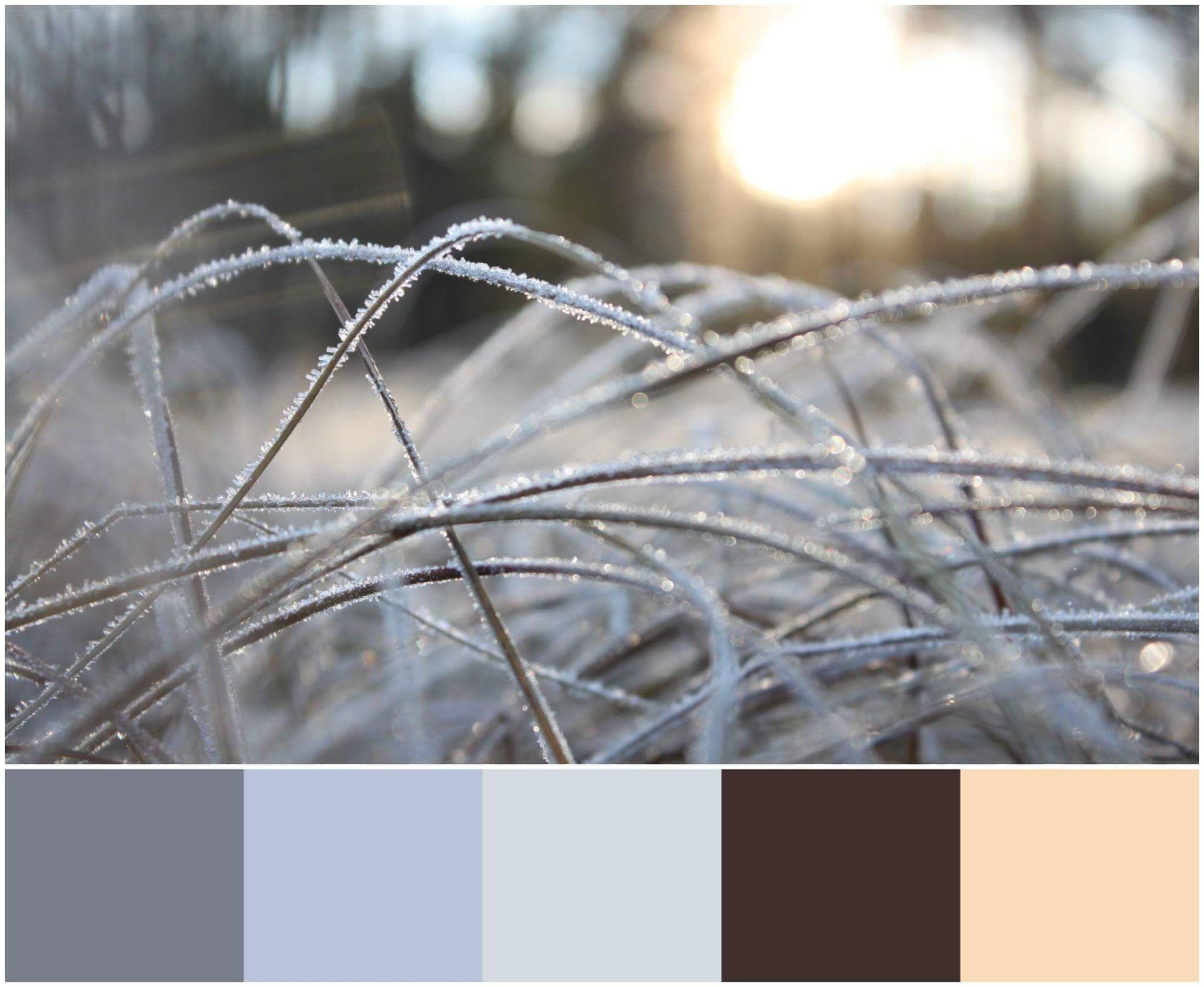 colorpalette Color palette, Design, Color
