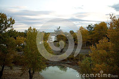 Populus euphratica forest is located in Wucaitan, Xinjiang, China