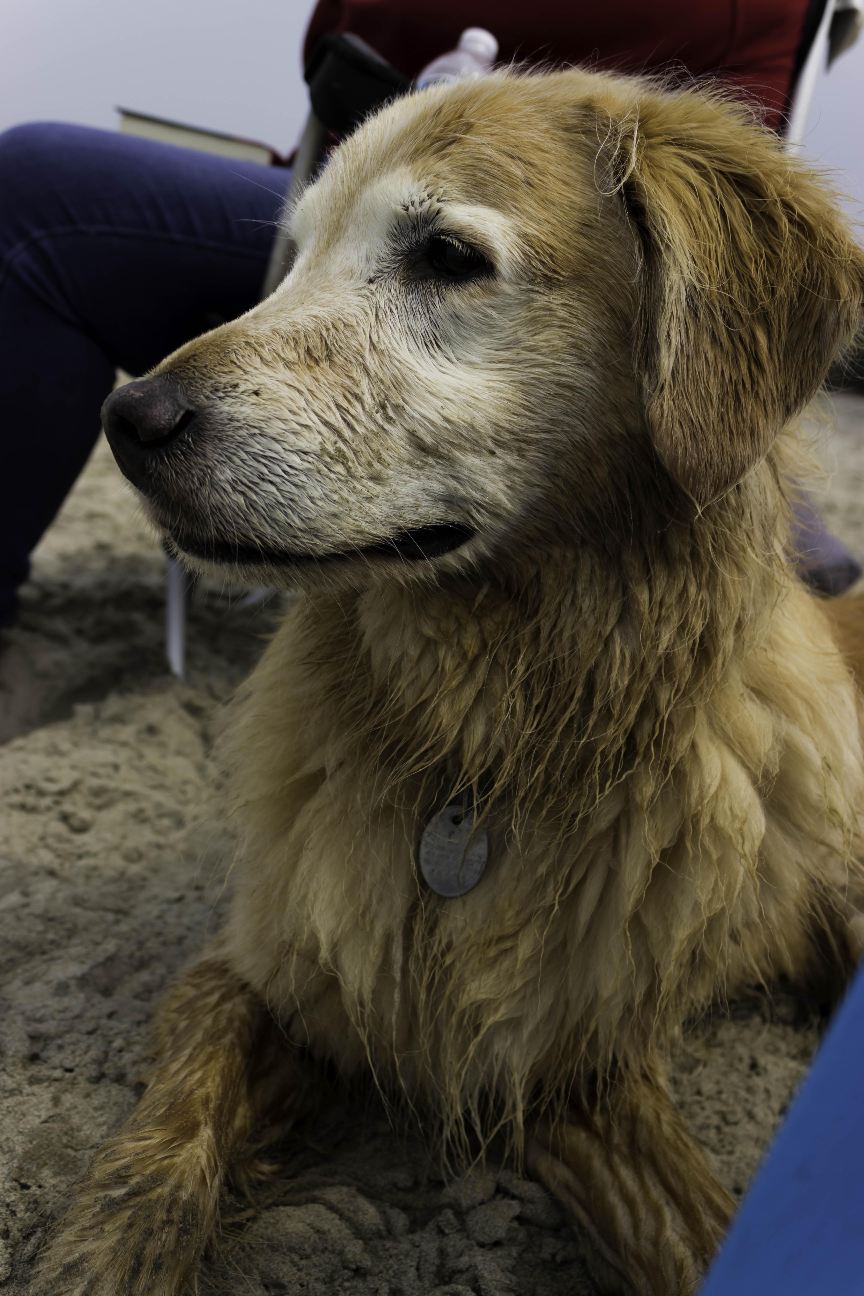 Reddit Meet Greta My Friend S New Boston Terrier Terrier Puppies Puppies Cute Puppies