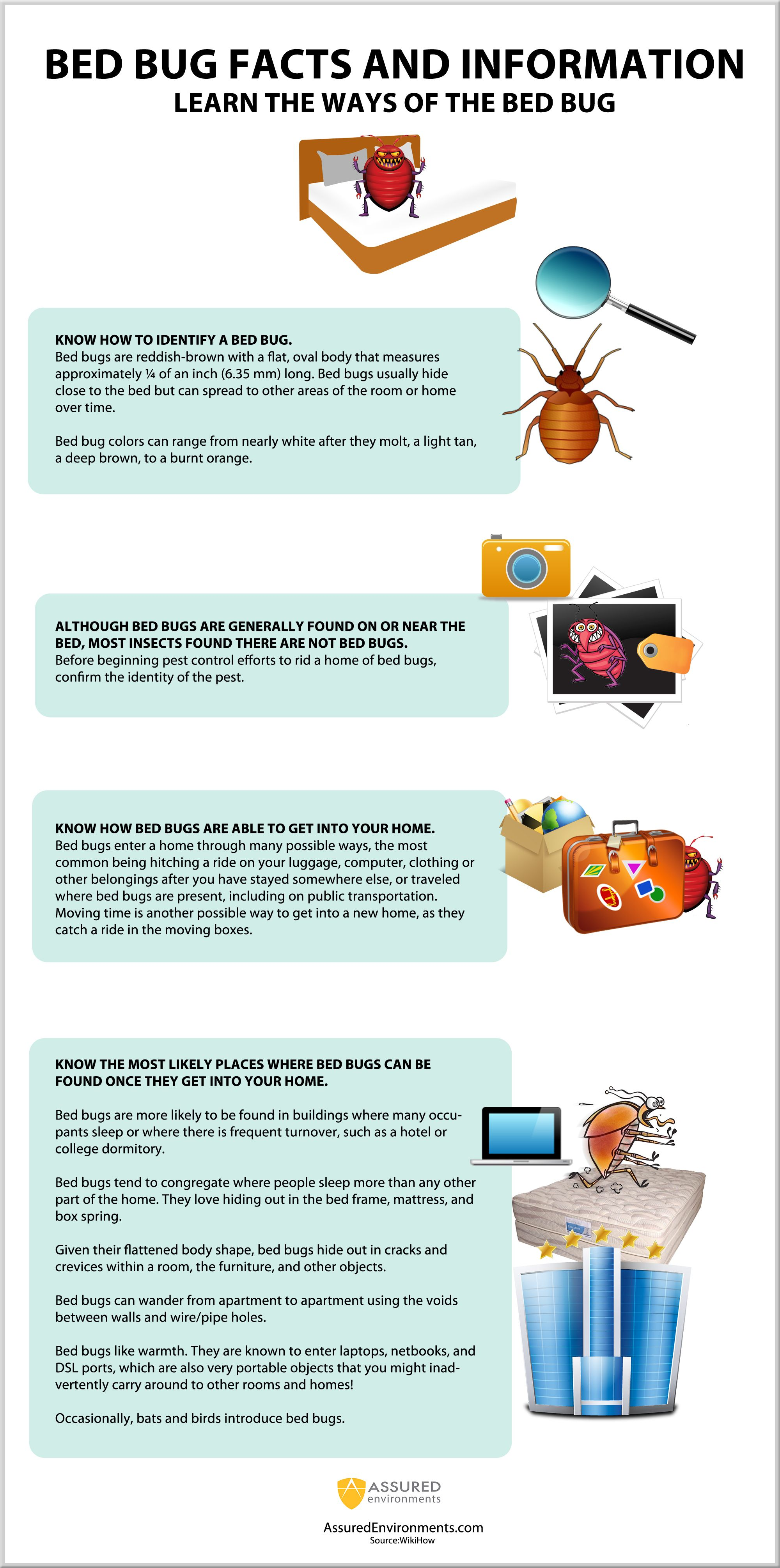 web epidemic myths baby bugs sucked blood protect after the or and blog skin bedbug about bed cimex yourself bug facts from