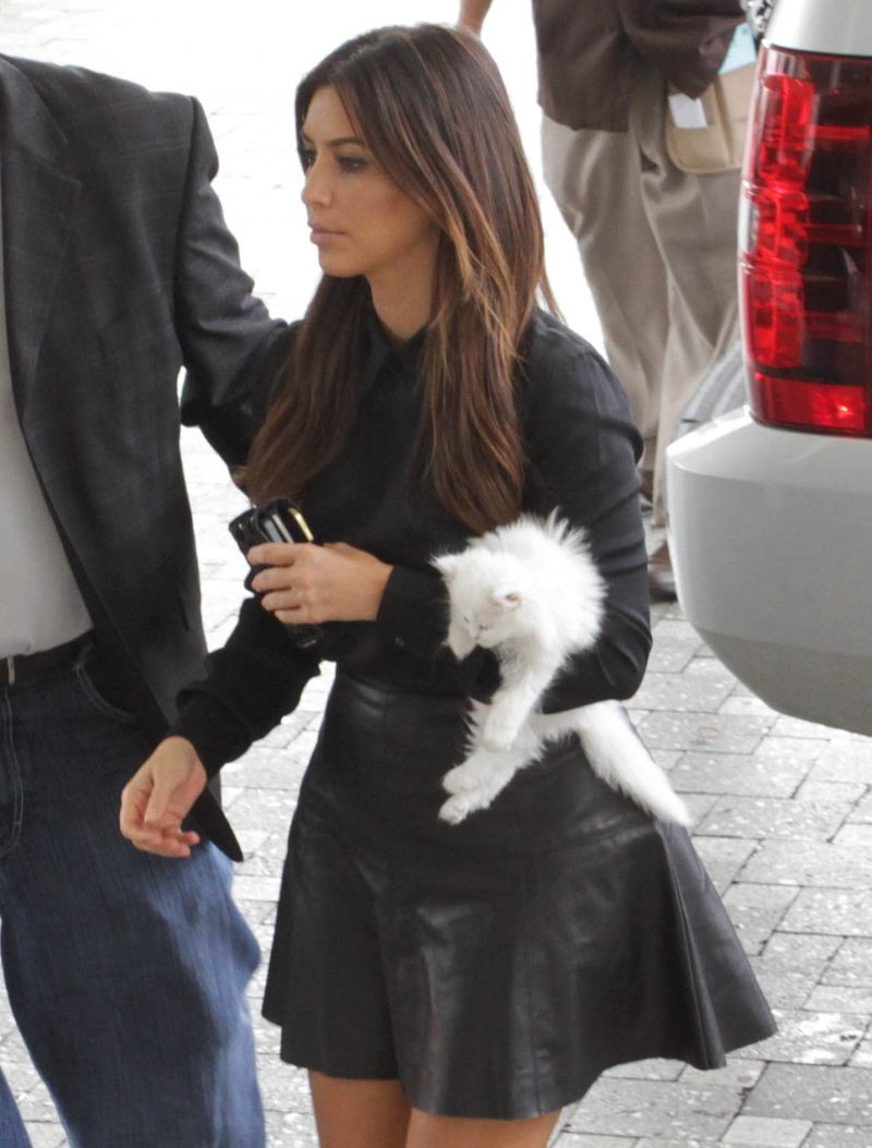 Kim Kardashian bought a fluffy Teacup Persian named the kitten