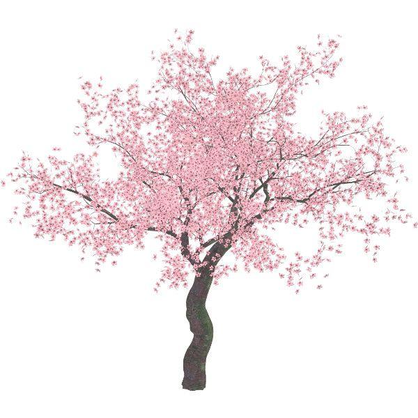 Page Not Found Scrapbook Flowers Sakura Tree Abstract Artwork