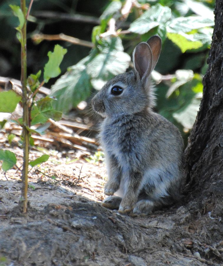 Young Wild Rabbit Rabbits Are Born Raise Under The Ground Naked
