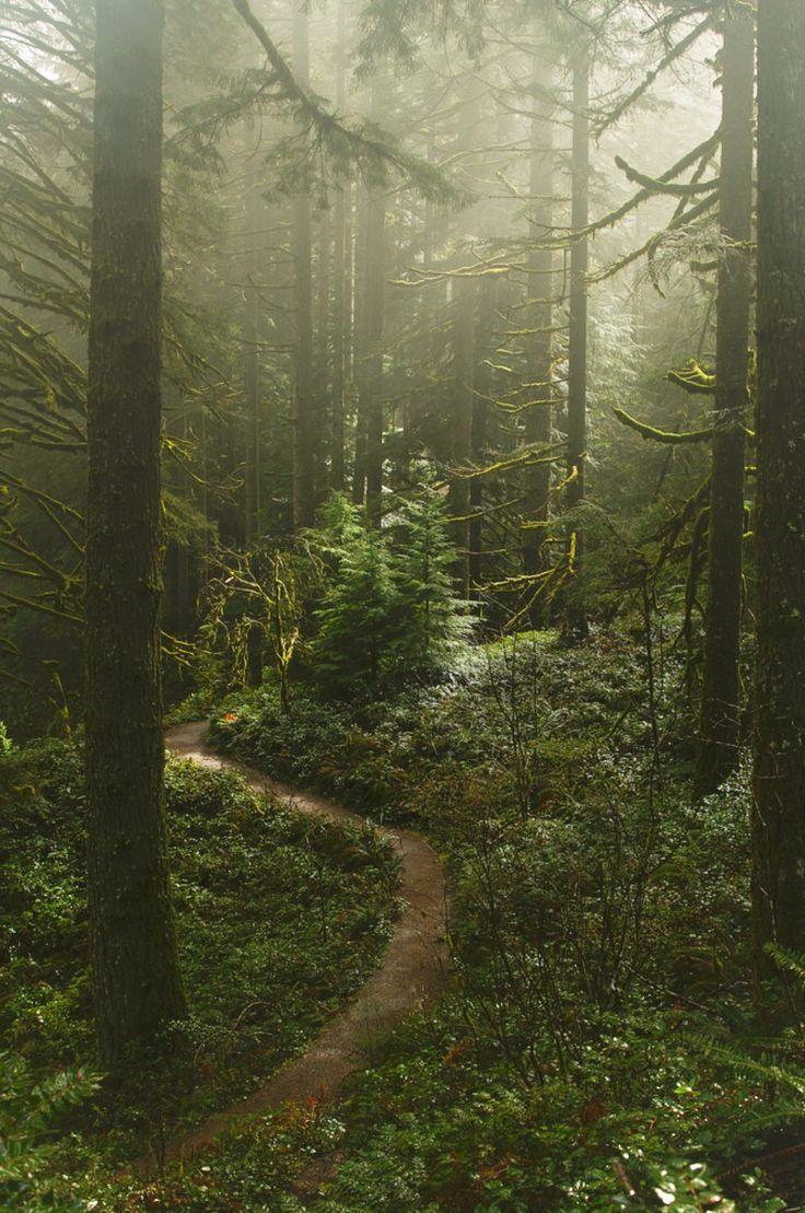 Misty path in the forest, Silver Falls State Park, Salem, Oregon // Anna Calvert #oregon #traveloregon #pnw #hiking #landscape #nature #pacificnorthwest