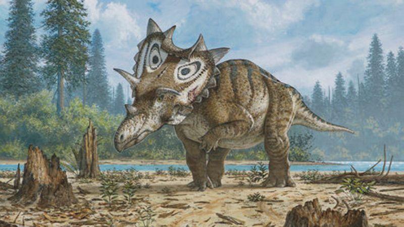 Dinosaurus žil na území dnešnej Severnej Ameriky pred 76 miliónmi rokov. | Nový…