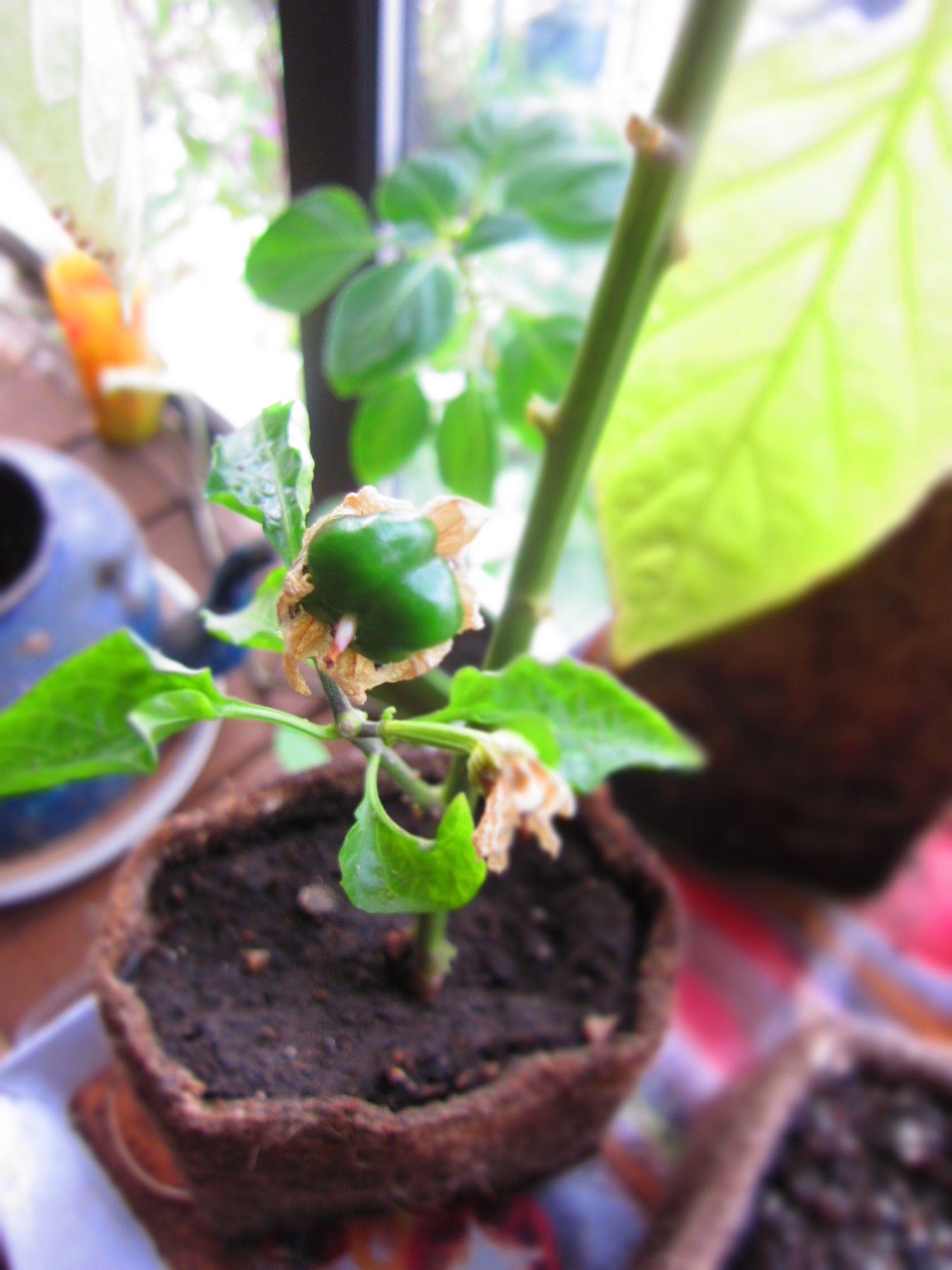Imagina tener tus propias hortalizas en la cocina de tu casa