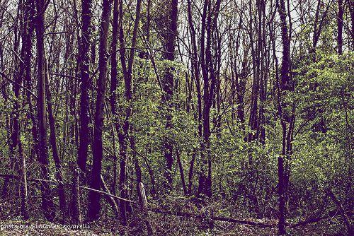 Gli alberi sono lo sforzo infinito della terra per parlare al cielo in ascolto. Rabindranath Tagore, Lucciole