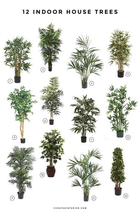 12 Lovely Indoor House Trees #easyhouseplants