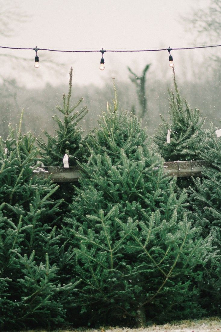 Shopper S Diary A Christmas Tree Farm In Maine Gardenista Christmas Aesthetic Christmas Tree Farm Merry Little Christmas