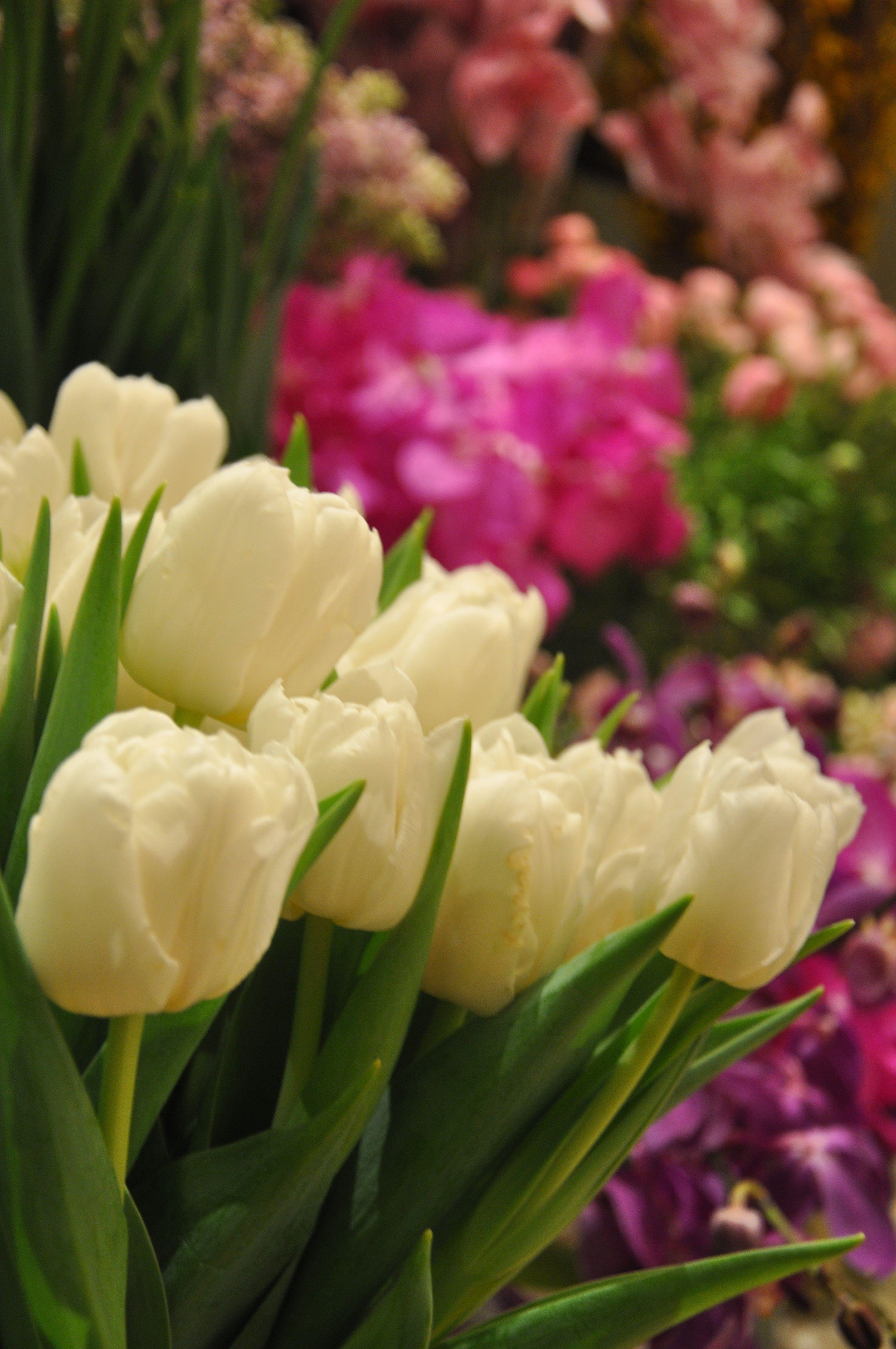Beautiful white tulips at Corinthia Londons in-house