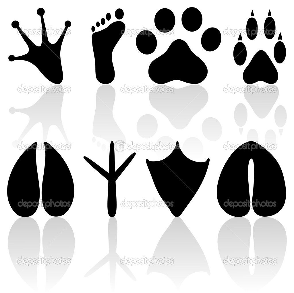 Footprint Collection Stock Vector Penguinn