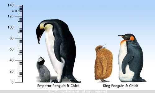 Emperor versus King Penguin | She Blinded Me With SCIENCE ...