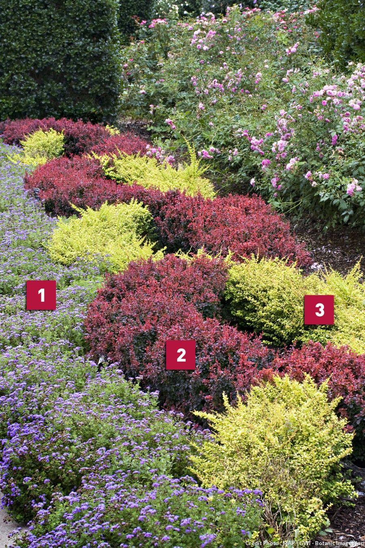 Arbuste Nain Persistant Plein Soleil réaliser un massif avec des couvre-sol | couvre sol, plantes